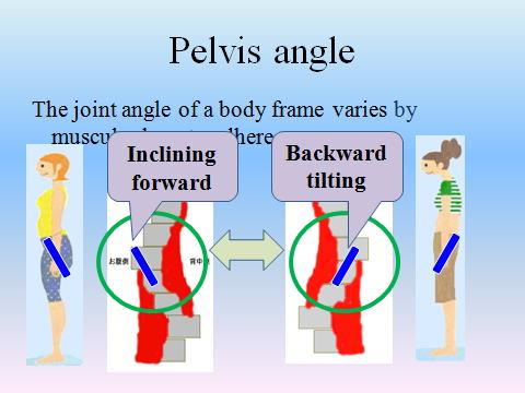 骨盤前傾きと骨盤後傾のシセトレ画像