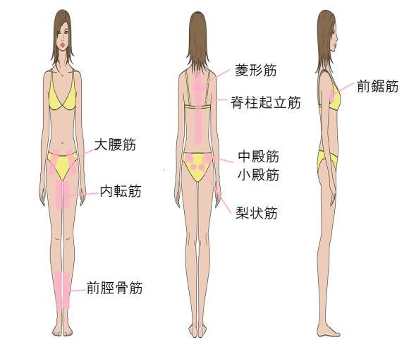 モデル筋 モデル筋エクササイズ